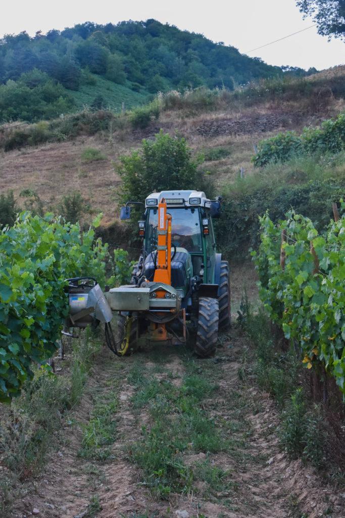 Vigne_ effeuillage_tracteur