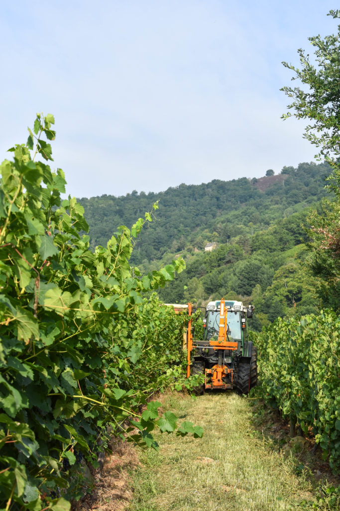 Vigne_ rognage_tracteur